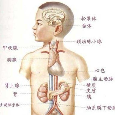 近年来随着甲状腺b超检查在常规体检中的普及,越来越多的人被查出患有
